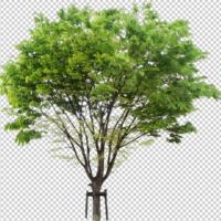 無料で使える建築パース用素材「切り抜き樹木」