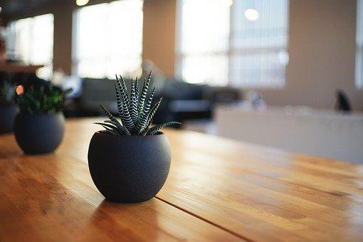 鉢植えの元写真